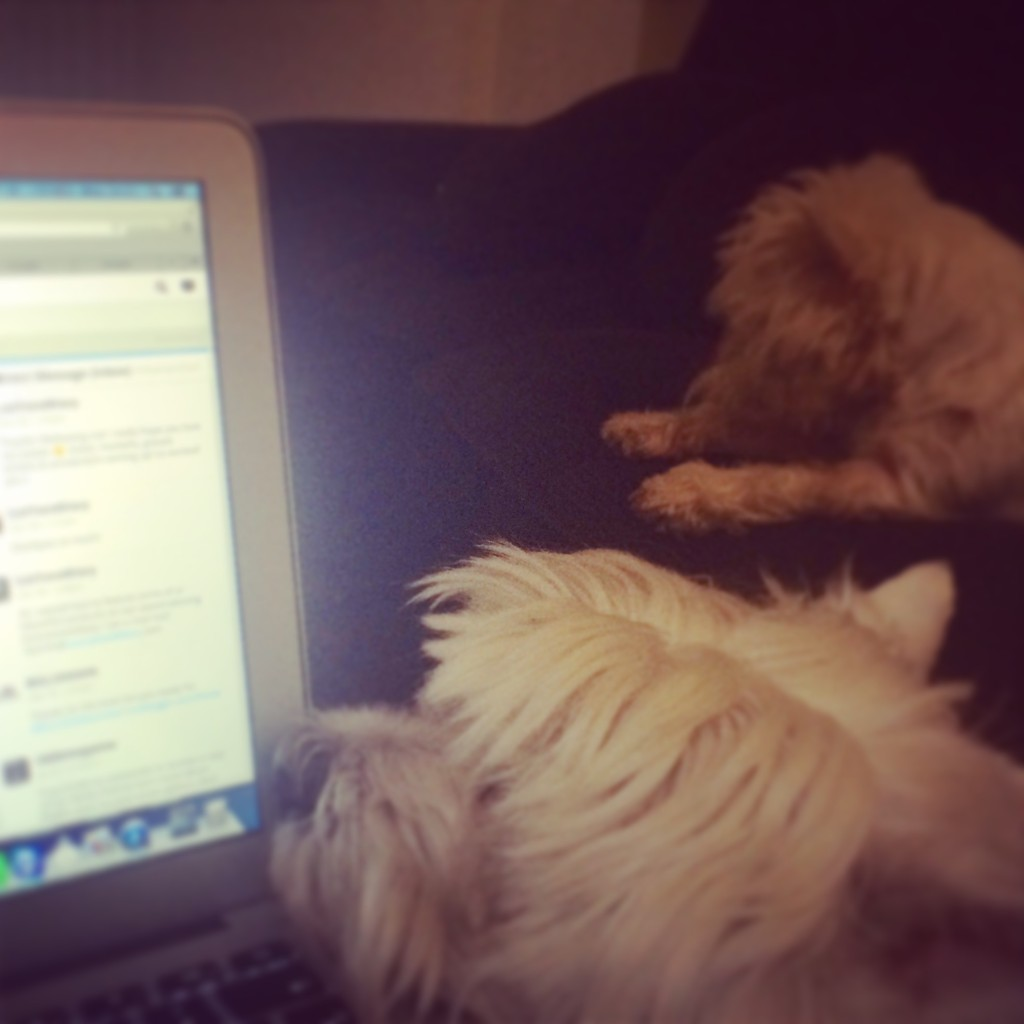 dogs and laptop