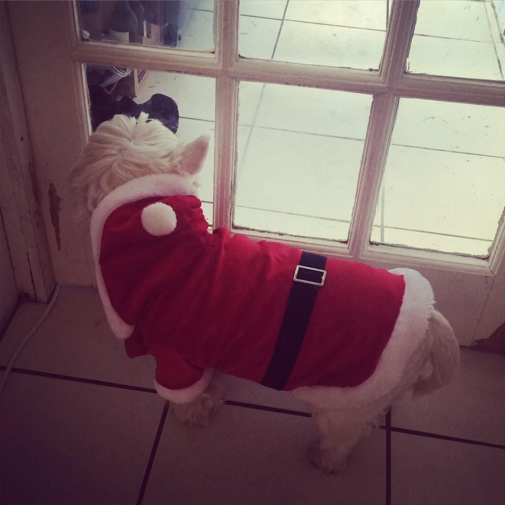 Christmas santa dog outfit