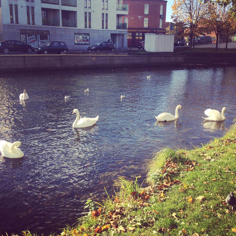 dublin canal morning