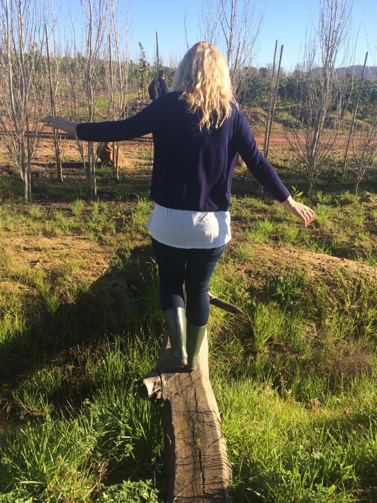 Farm walk babylonstoren