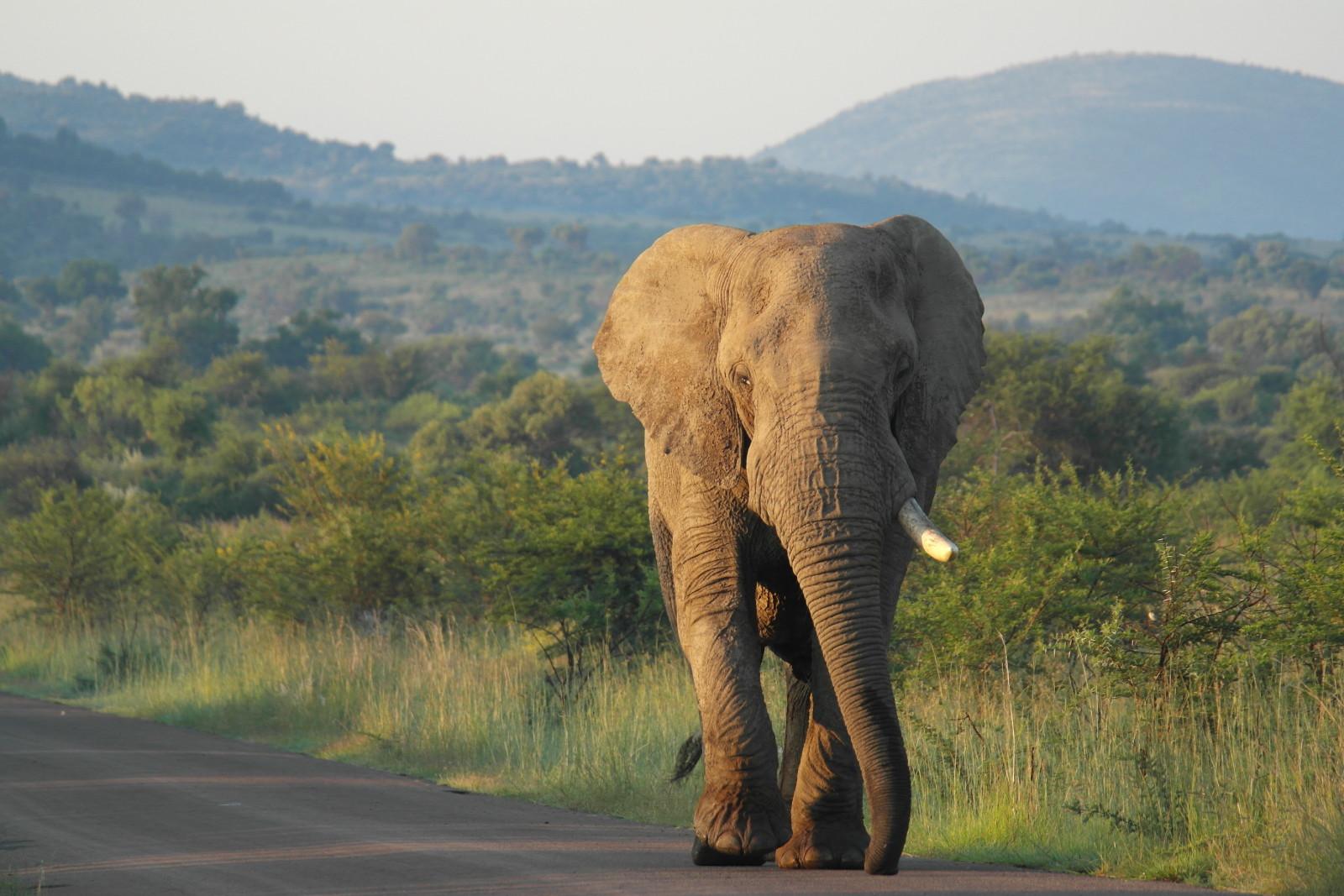 Pilanesberg Game Reserve, South Africa