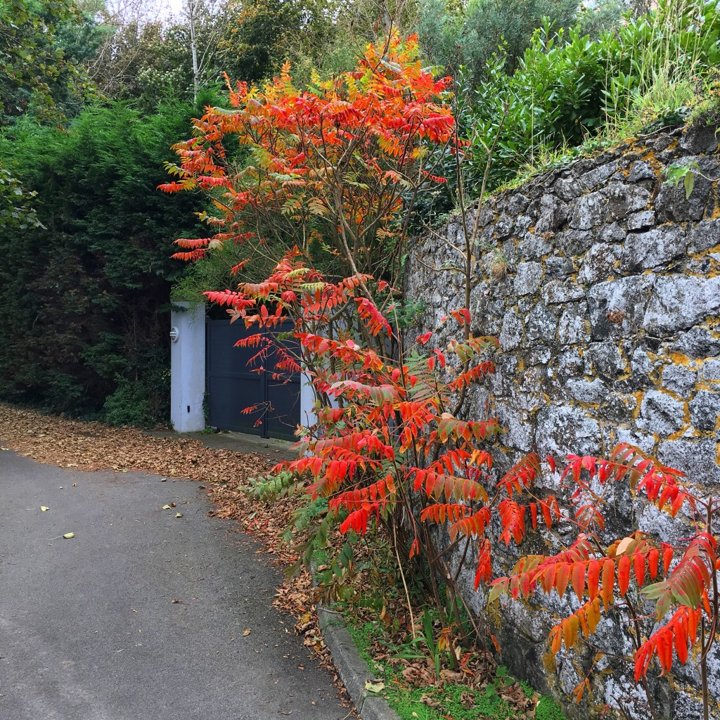 autumn in guernsey