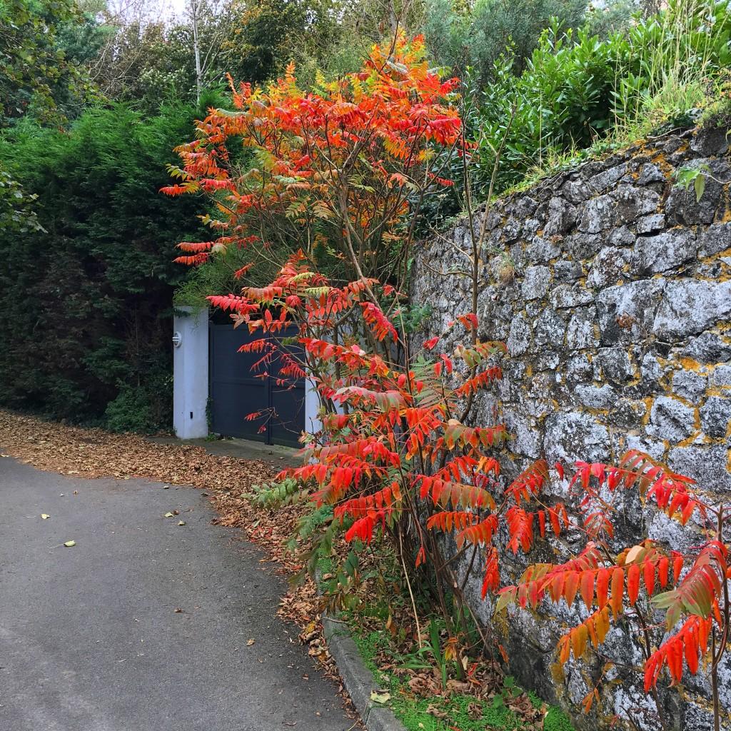 autumn in guernsey