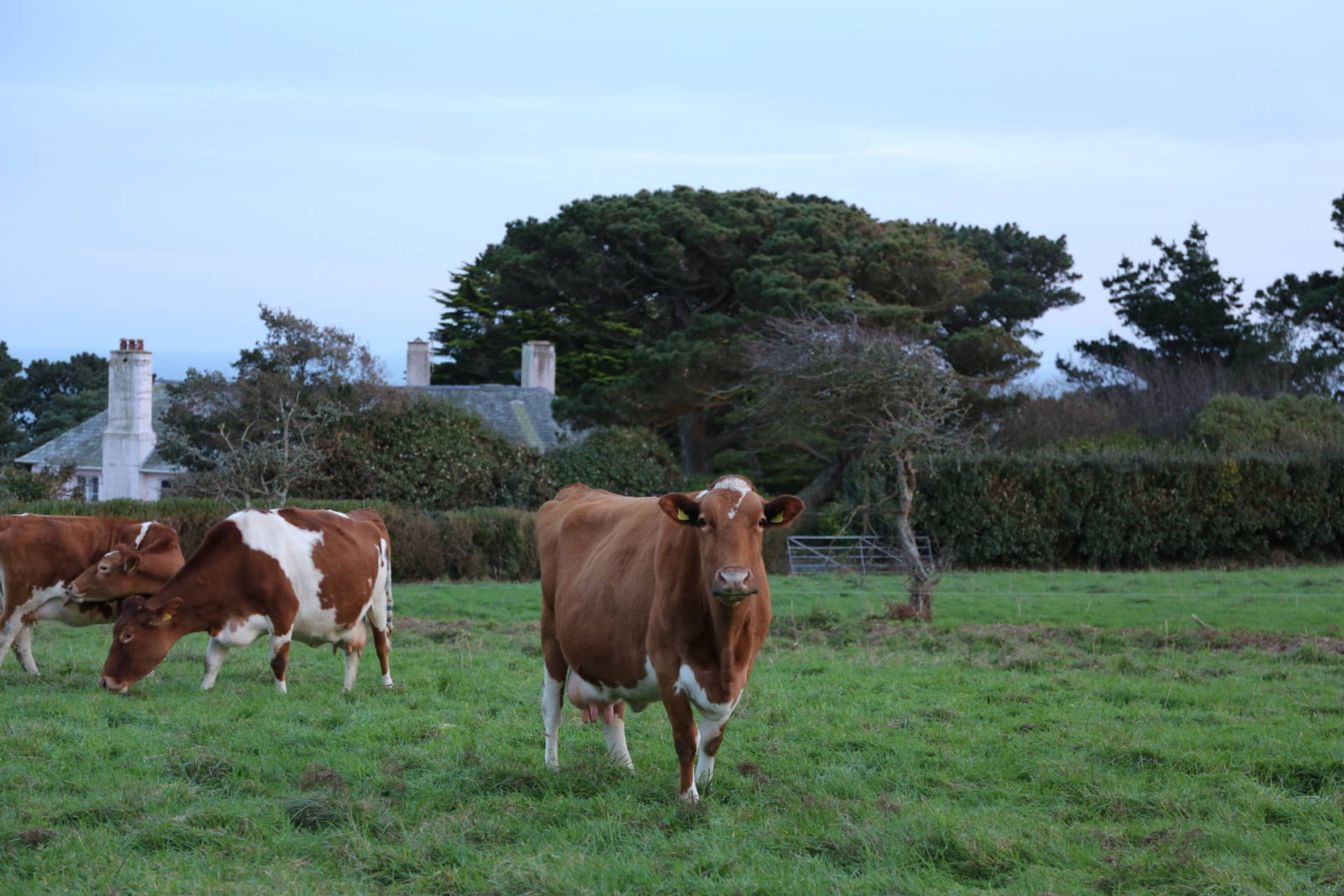 Updates - living in Guernsey