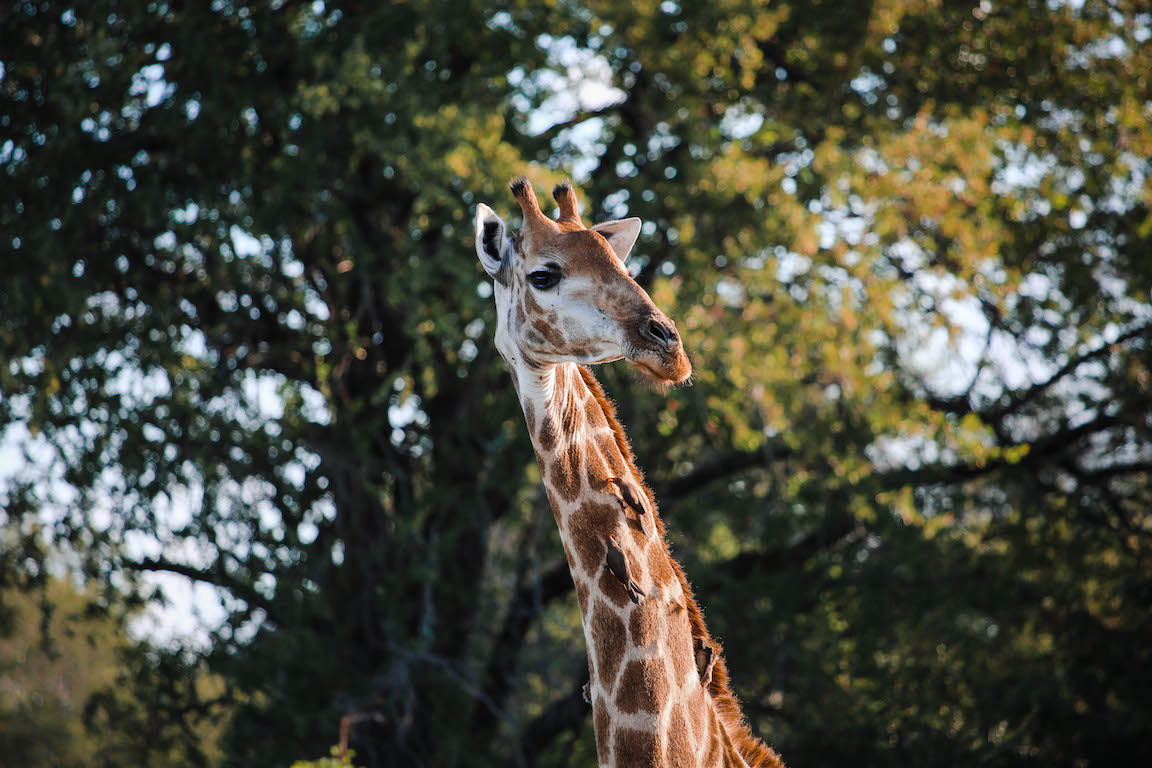 Kruger Park Photo Diary