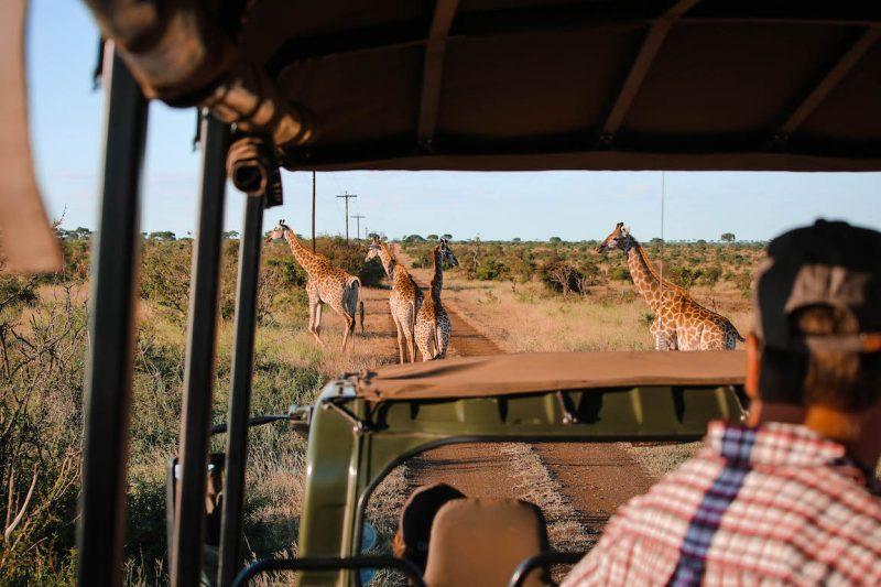 Kruger Park, South Africa - StefanieGrace.com